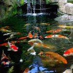 Mengapa Ikan Selalu Mendoakan Orang yang Berilmu ?