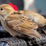 Kisah Kasih Sayang Sayyidina Umar terhadap Burung Pipit